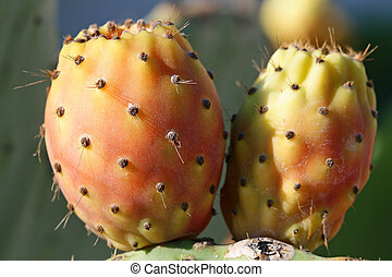 Spain, chumbos u2013 fruits of an catus - Spain, fruits of...