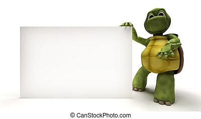 烏龜, 空白, 白色, 簽署