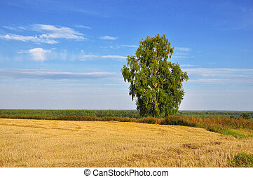 Lonely birch, field and the blue sky with clouds