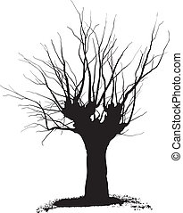 Acacia, tree pruning - Silhouette acacia tree black drawings...