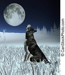 Wolf Howling at the Full Moon - Lone wolf in a winter...