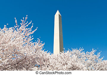 Cherry Tree Washington Monument DC - Cherry Blossoms...