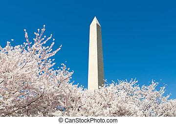 Cherry Tree Washington Monument DC
