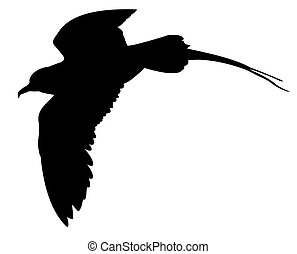vector silhouette of the sea bird on white background
