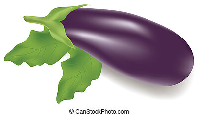 eggplant  - vector illustration of an eggplant with leaves