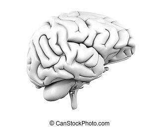 Human Brain - A human brain Medical 3D rendered Illustration...