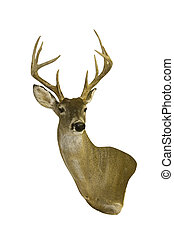 isolated deer head with horns - a trophy buck head isolated...