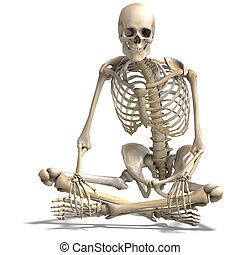 anatomical correct male skeleton 3D rendering with clipping...