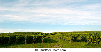 The Meersburg vineyards at the northern banks of Lake...