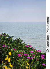 flowers in front of sea