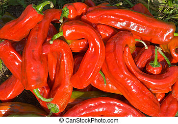 Red peppers 4