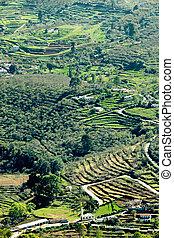 Terraced fields in Western Ghats mountains. Kodaikanal,...