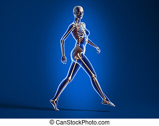 Walking woman with bone skeleton - X ray looking 3D...