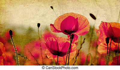 vintage poppies background - red poppies on ambient...