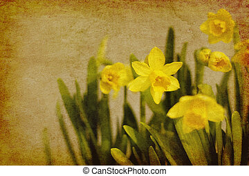 vintage daffodils on ambient background