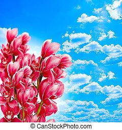 藍色, 天空, 針對, 蘭花