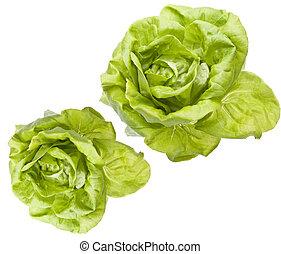 hydroponic, Bibb, salade verte