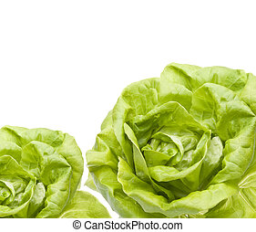 Hydroponic Bibb Lettuce Border Isolated on White.