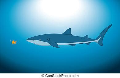 Big Shark and Small Fish - A big shark and a small fish...