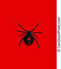 Black Widow - This adult female had an eggsac of approx. 180...