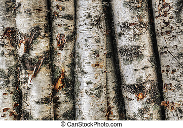 Birch trunks - Close-up of a stack of young birch trunk logs