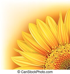 Background with sunflower - Background with half of the...