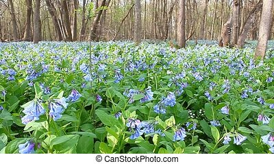 Spring in Illinois - Beautiful Spring Day in the forests of...