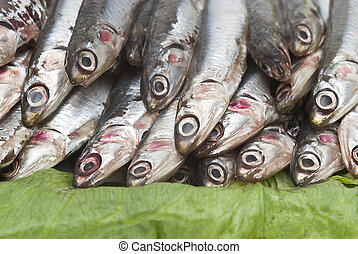 Anchovies  - Some fresh anchovies at the market to be sold.