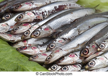 Anchovies on some green leaves. - Some fresh anchovies at...
