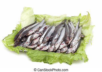 Anchovies 6. - Some anchovies on a white background.