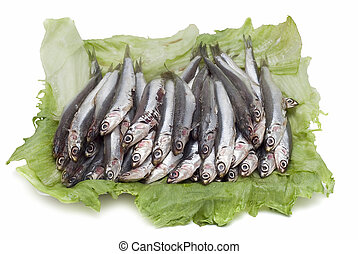 Anchovies 5. - Some anchovies on a white background.
