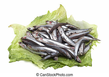 Anchovies 3. - Some anchovies on a white background.