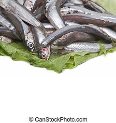 Anchovies 2. - Some anchovies on a white background.