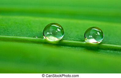 Two raindrops on a green leaf