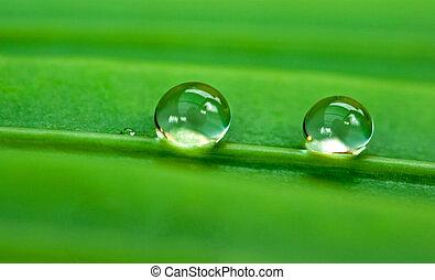 verde, folha, dois, pingos chuva