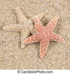 Starfish in the sand - copy space