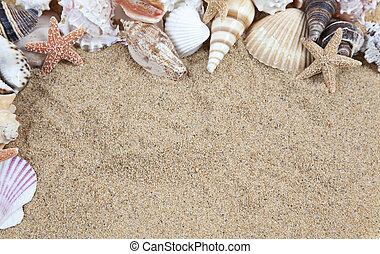 Nice sea shells on the sandy beach taken closeup, Shell...