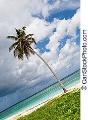 One Palm on a white sand beach near ocean