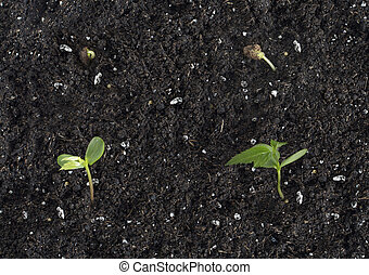 Apple Tree Sprout Growth Stages - Image shows 4 stages of...