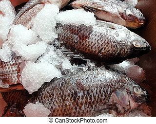 limpo, Tilapia, gelo, agricultores, mercado
