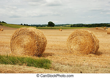 Round straw bales in harvested fields
