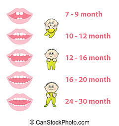 baby-teeth - how to grow your baby's teeth