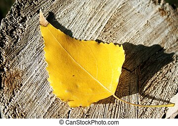 Yellow leaf on stub in the forest