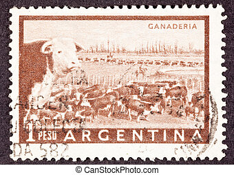 Heard of beef cattle in the Argentinean pampas being herded...