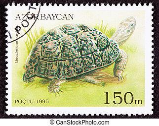Leopard Tortoise, Geochelone pardalis in a marshy...