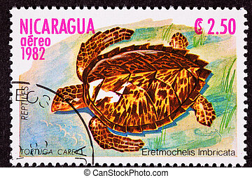 """Hawksbill Sea Turtlem Eretmochelys Imbricata, the primary source of """"tortoise shell"""" material, hunted nearly to extinction."""