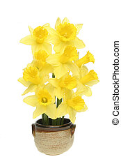 Daffodil arrangement - Arrangement of daffodils in glazed...