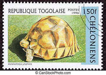 Tortoise known as Angonoka, Ploughshare, or Madagascar...