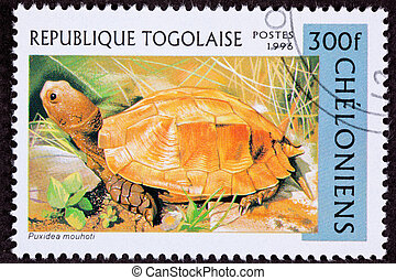 Canceled Togan Postage Stamp Orange Keeled Box Turtle...
