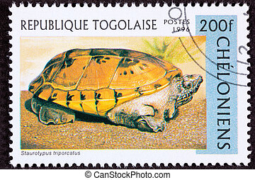 Canceled Togan Postage Stamp Orange Mexican Musk Turtle,...